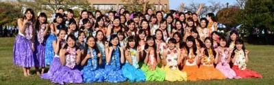 Hoa Aloha写真